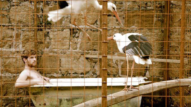 o voo das cegonhas